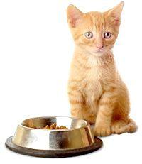 Фото - Чим годувати кошеня