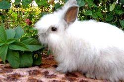 Фото - Чим годувати кроликів