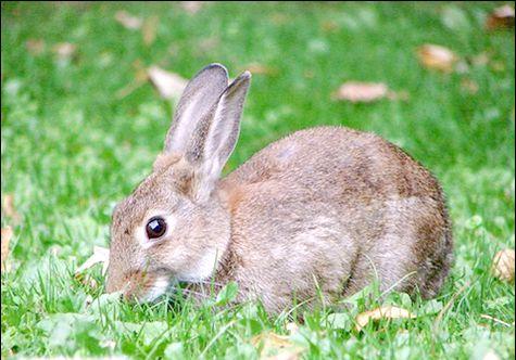 що їдять зайці