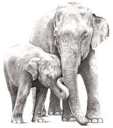 Фото - Де живуть слони
