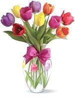 Як і коли садити тюльпани