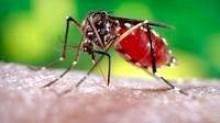 Як позбутися комарів народними методами.