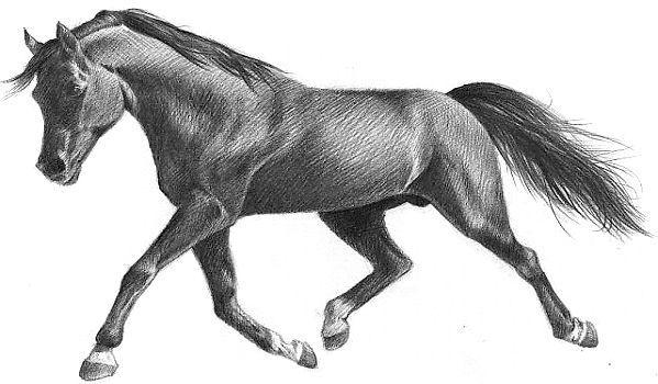 Фото - Як навчитися малювати олівцем кінь?