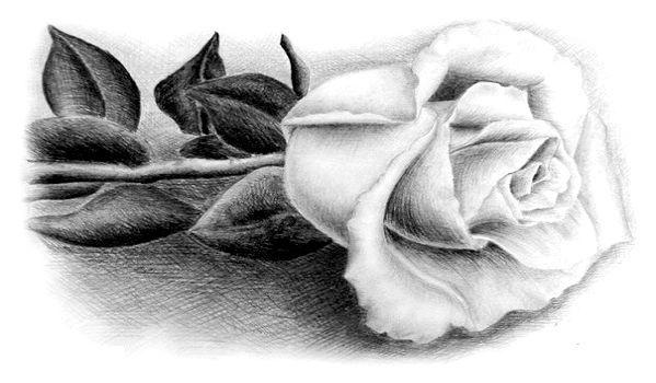 Фото - Як навчиться малювати троянду?