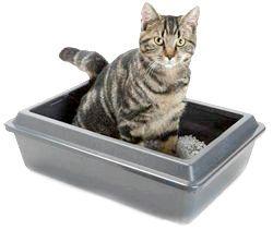 Фото - Як привчити кішку гадити де попало