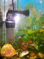 Фото - Як полагодити акваріумний фільтр, якщо пошкоджена загороджувальна решітка