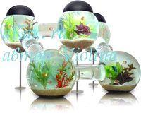Фото - Як підтримати екосистему в домашньому акваріумі