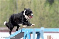 Фото - Як підтримувати здоров'я опорно-рухового апарату собак