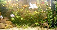 Фото - Як підготувати акваріум для рибок?