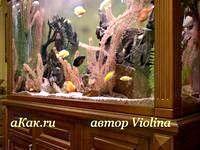 Фото - Як підібрати акваріум для домашнього інтер'єру