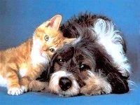 Фото - Як підібрати домашню тварину під себе.