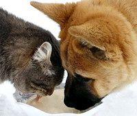 Фото - Як познайомити цуценя з кішкою, життя на одній території.