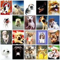 Фото - Як правильно вибрати собі собаку?