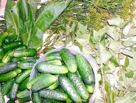 Фото - Як приготувати малосольні огірки в пакеті, каструлі або банку?