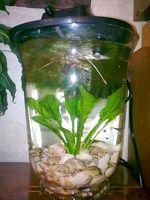 Фото - Як зробити міні акваріум з вази