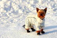 Фото - Як доглядати за собакою взимку
