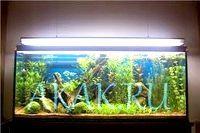 Фото - Як вибрати лампу для акваріума