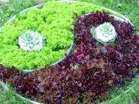 Фото - Як вибрати салат для салату