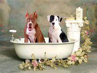 Фото - Як вибрати шампунь для собаки