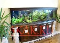 Фото - Як вибрати таймер для акваріума