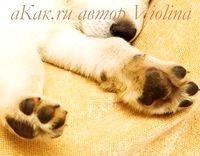 Фото - Як вимити лапи собаці після прогулянки