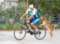 Фото - Як захиститися, якщо велосипедиста переслідує собака