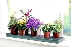 Фото - Які квіти можна тримати вдома?