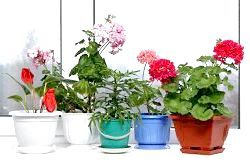 Фото - Які квіти потрібно тримати вдома?
