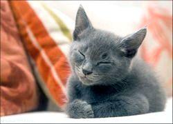 Фото - Чому кішки муркочуть