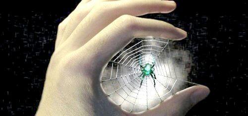 Фото - Чому не можна вбивати павуків у домі?