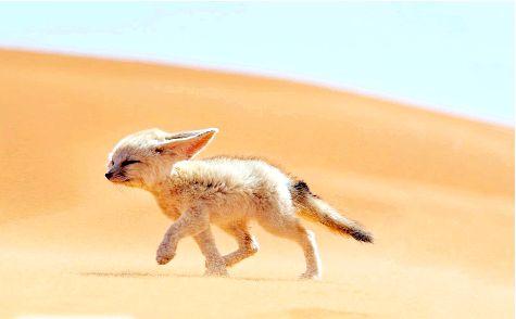 Фото - Найменша собака в світі