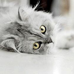Фото - Скільки кішки ходять вагітні