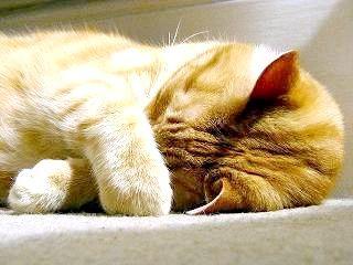 Фото - Млявий і сонливий кіт. Які можуть бути причини?
