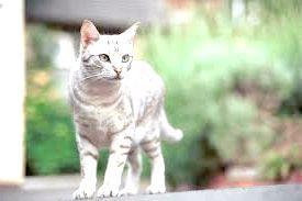 Фото - Виділення у кішки після пологів
