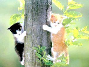 Фото - Вивіз кошеня на природу