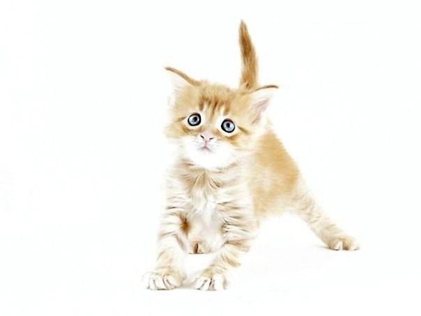 Фото - Захворів кошеня. Млявий, немає апетиту. У чому причини?