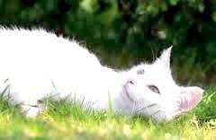 Фото - Захворів кошеня